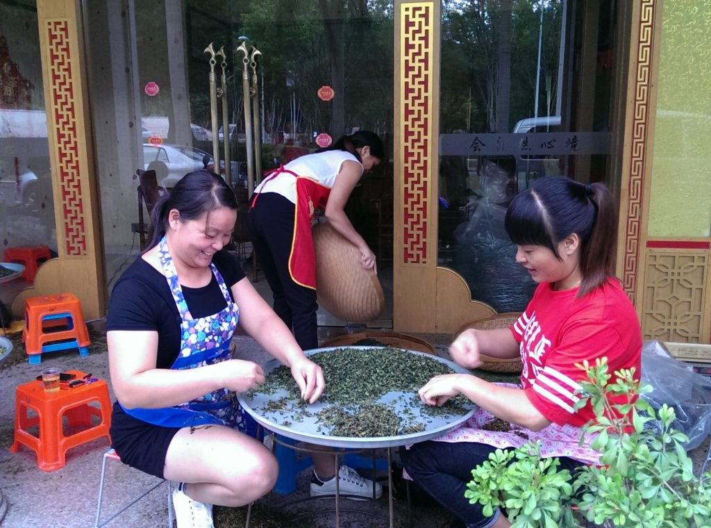 Ladies removing stems from Iron Buddha maocha