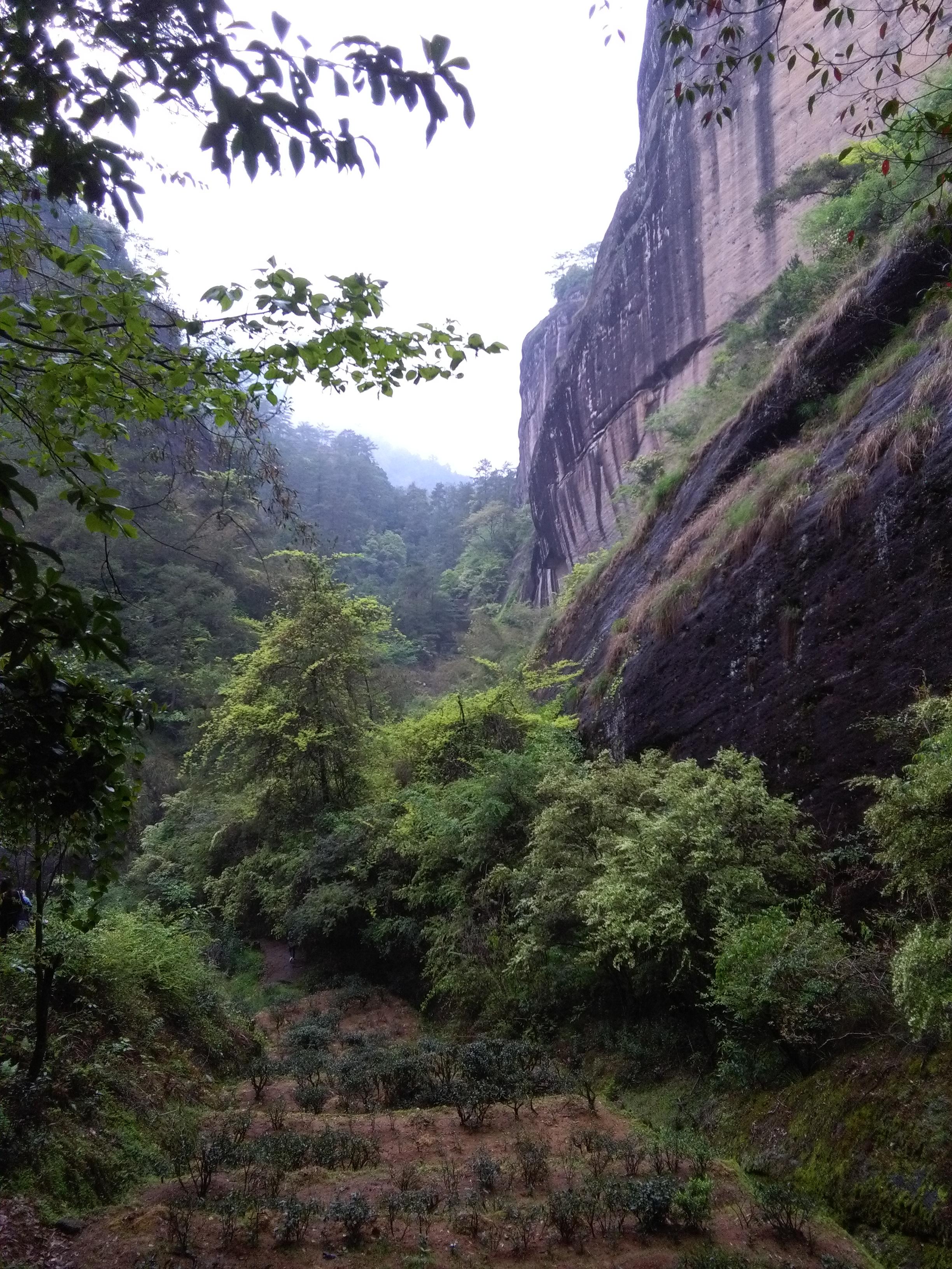 Rock tea in valley